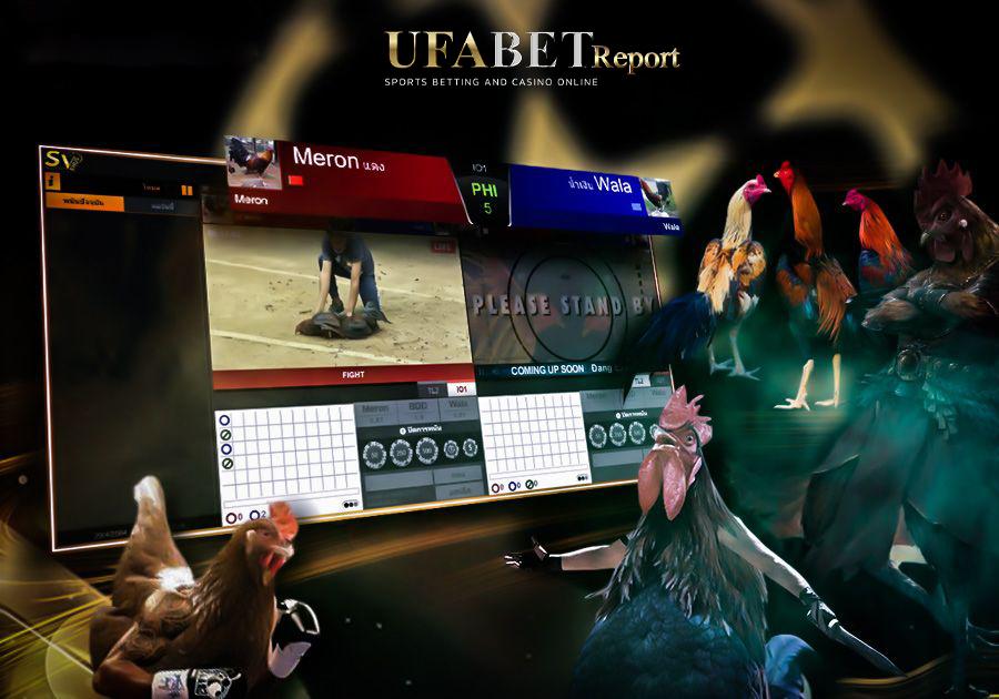 แทงไก่ชนออนไลน์ เล่นผ่านเว็บ UFABET เล่นง่ายได้เงินจริง